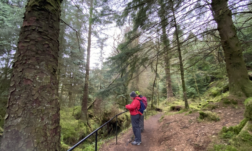 Two walkers peer over the handrail down into the gorge, standing on a good path with fir trees towering overhead